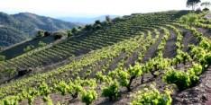 第141回 スペインワインを楽しむ会