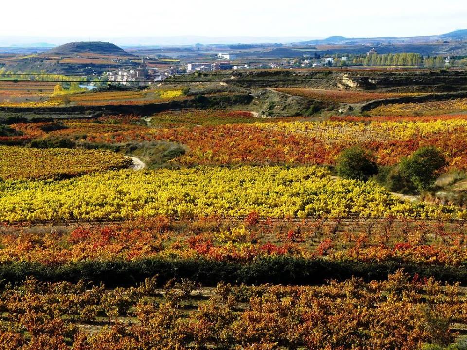 第144回 スペインワインを楽しむ会「新年はリベラ・デル・ドゥエロから!」