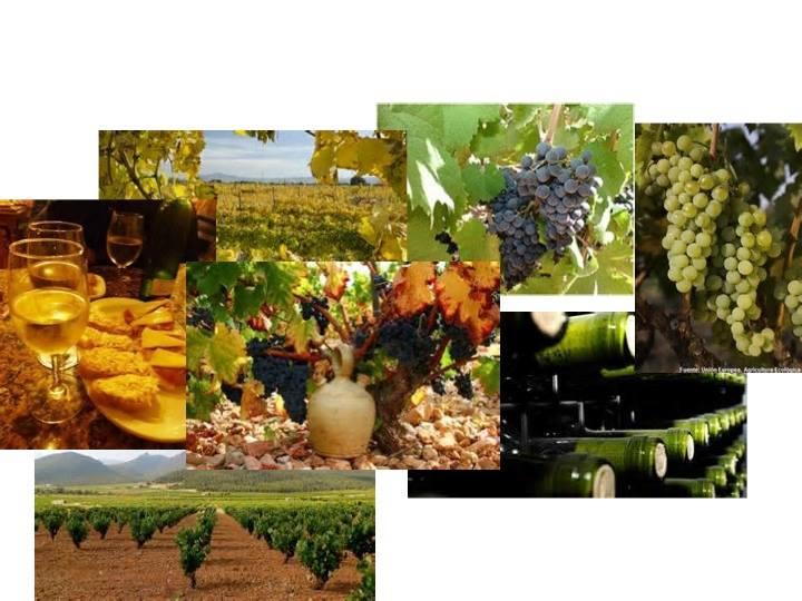 第146回 スペインワインを楽しむ会「春の午後、地中海岸のワインたちに酔う!」