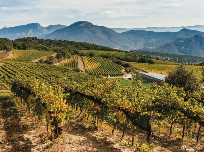 第148回 スペインワインを楽しむ会「今年も夏が来た!カタルニアのワインで乾杯!」