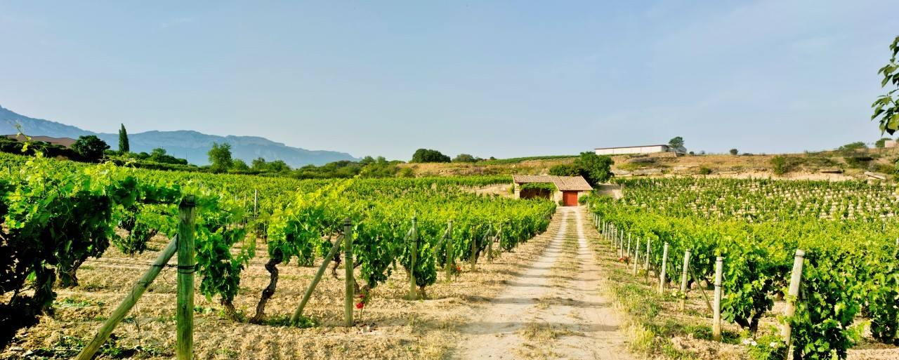 スペインワインを楽しむ会・特別企画「アルタディ、幻のコレクション公開!」
